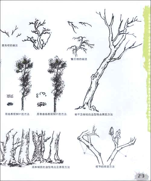 美术课堂?线描:植物树木写生教程(6-18岁) [平装]