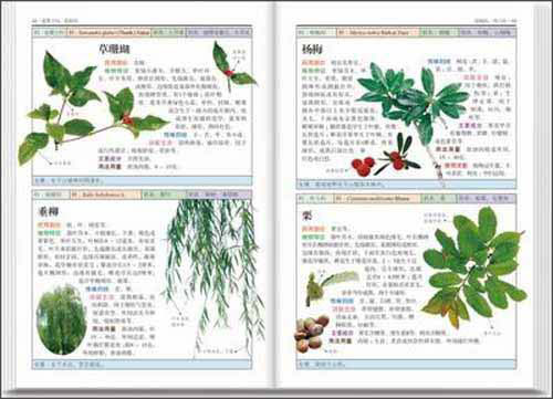 南方药用植物:近600种中国南方药用植物的彩色图鉴
