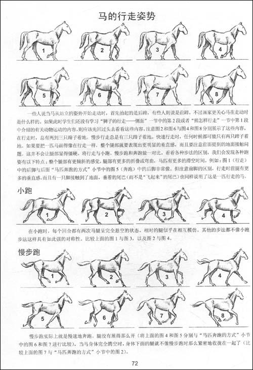 世界绘画经典教程:动物素描