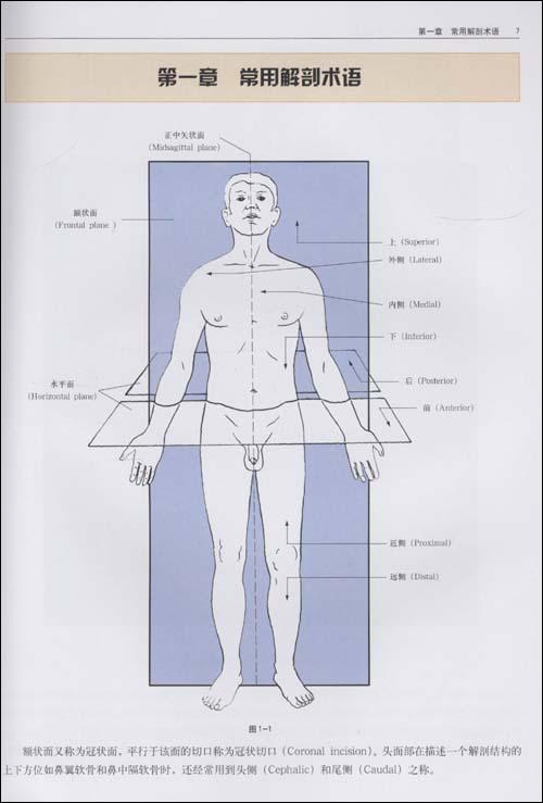 面部分区解剖图谱:手术原理与整形实践