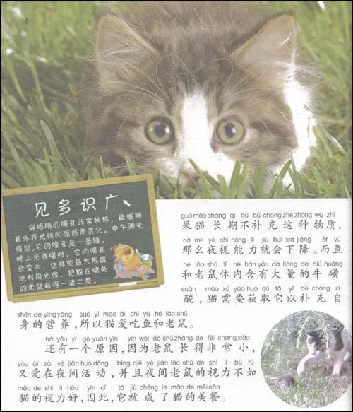 壁纸 动物 猫 猫咪 小猫 桌面 500_583