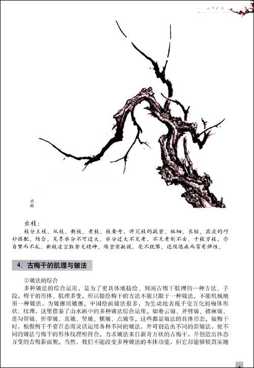 梅树简笔画 枝干 手绘
