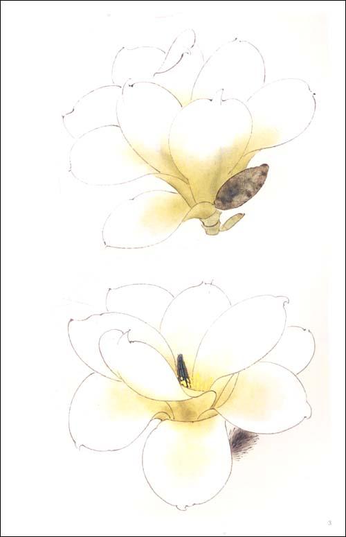玉兰花工笔画图片大全-玉兰花图片工笔绘画-工笔画猴子图片大全-海棠