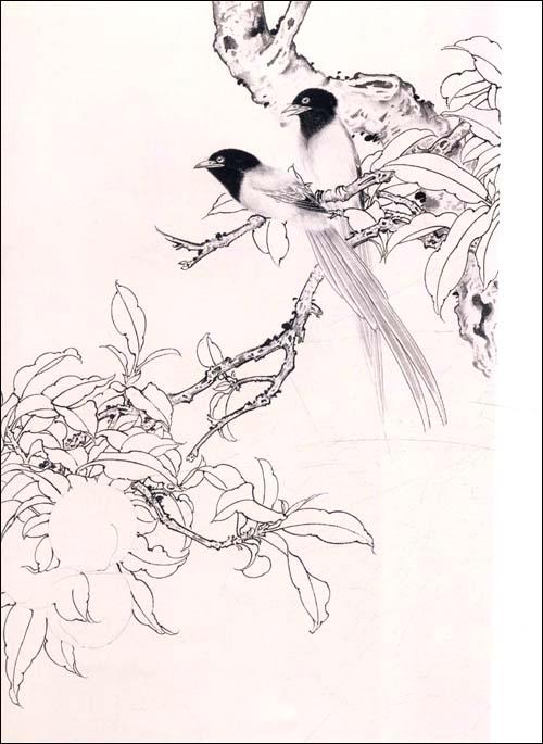 工笔花鸟画教程鹩哥的画法
