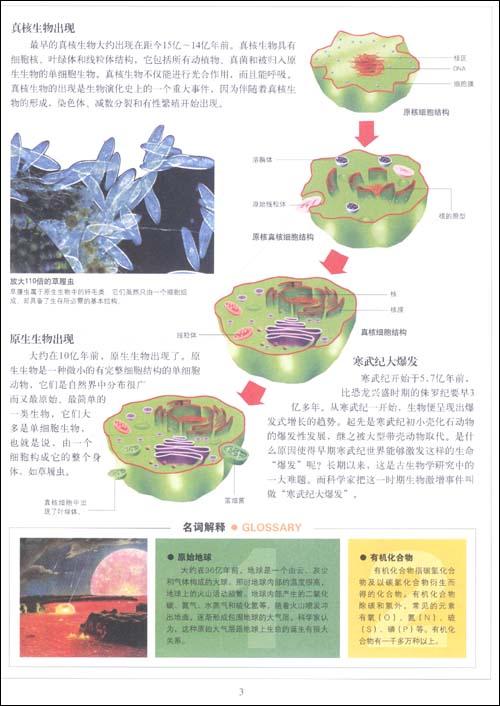 中国少年儿童百科全书:精华版