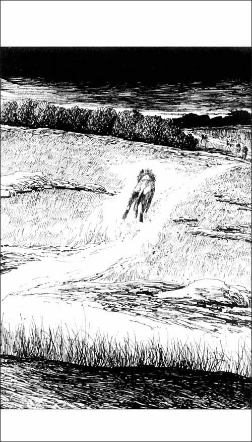 动物小说大王沈石溪品藏书系:雄狮去流浪
