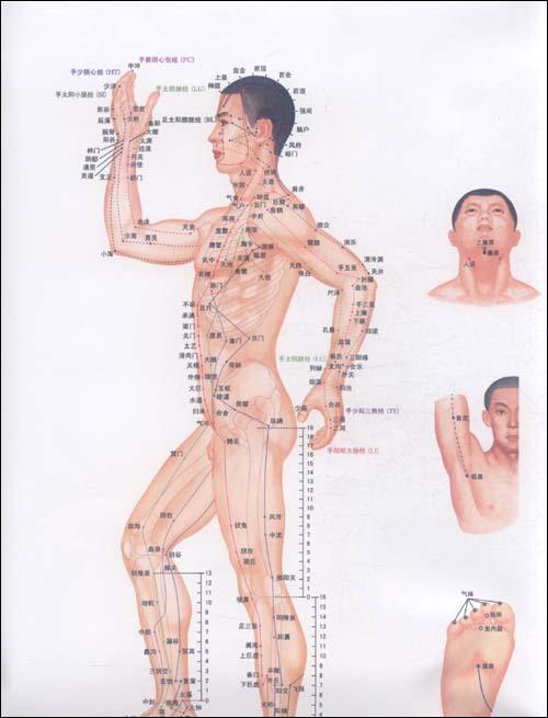 便携式针灸穴位挂图