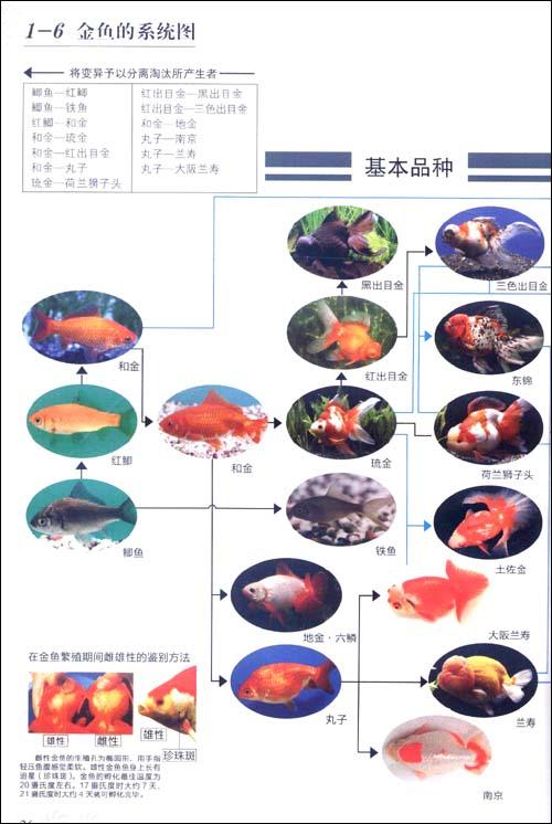 串珠金鱼步骤口诀图解