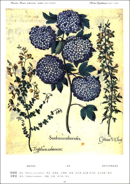 世界最伟大的花卉图谱:花卉圣经