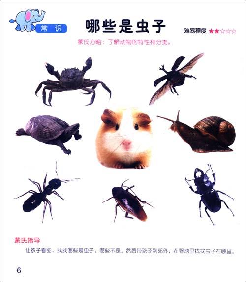 蒙特梭利教育丛书:0-6岁儿童生活能力培养