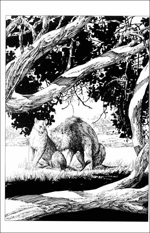 动物小说大王沈石溪品藏书系:红飘带狮王