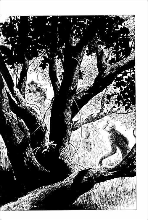 动物小说大王沈石溪品藏书系:王妃黑叶猴