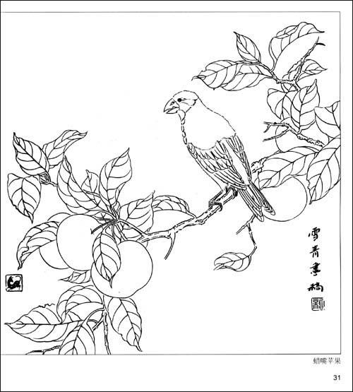 素描和平鸽-山茶白鸽   伯劳莲花   文摘   版权页:   插图:图片