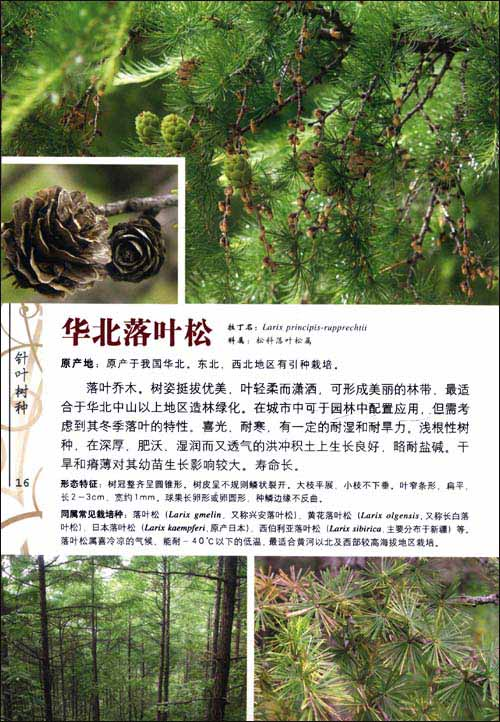 园林植物彩色图鉴:乔木与观赏棕榈
