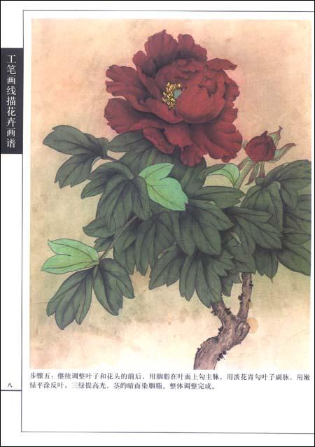 入门教程丨工笔画线描花卉画谱 牡丹篇