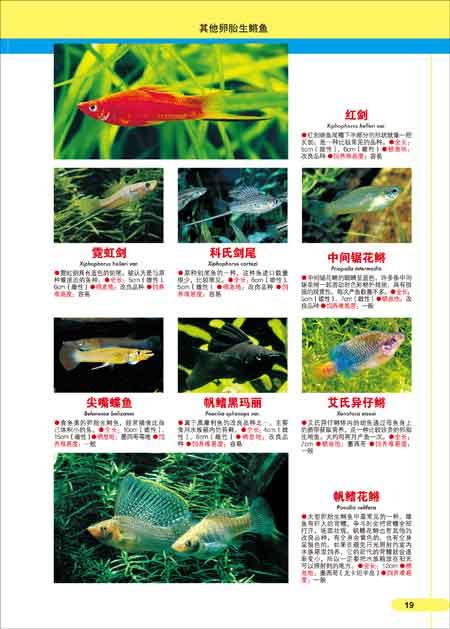 热带鱼图鉴