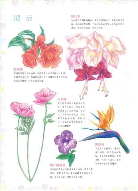 回至 飞乐鸟的色铅笔手绘世界:花卉入门篇 (平装)
