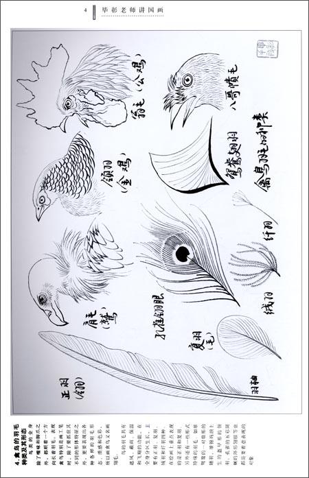 《毕彰老师讲国画:工笔禽鸟白描技法》