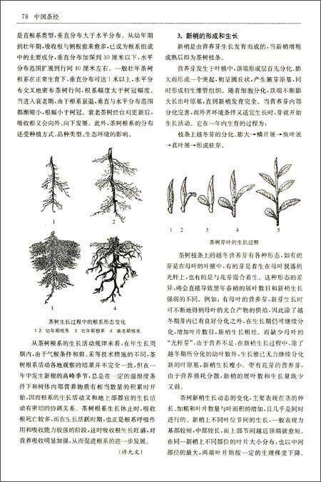 中国文化经典系列:中国茶经