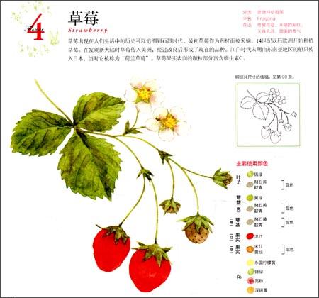 幸福四季水彩花园:春夏秋冬之花卉