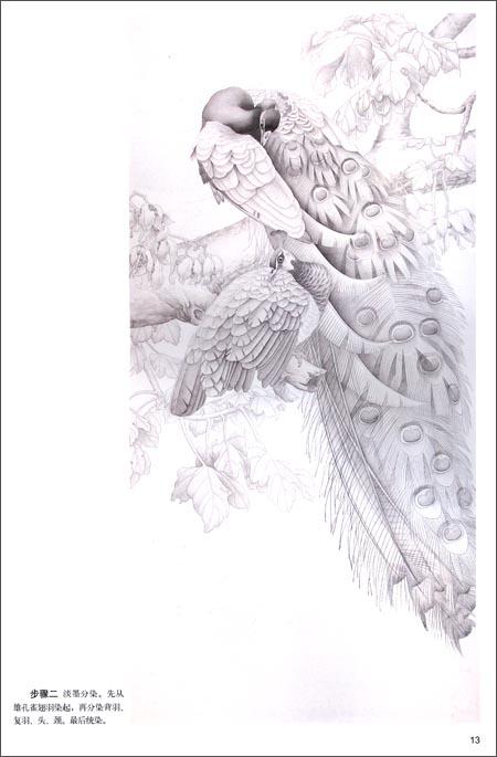 工笔孔雀画法图片