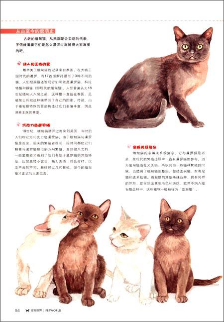 宠物世界:猫迷