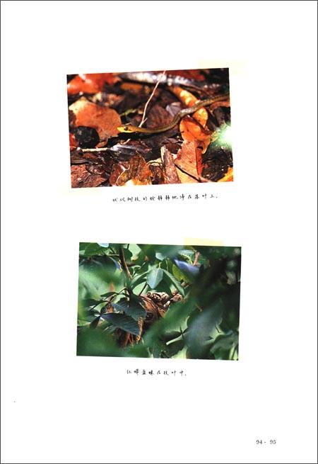 中国国家地理:探险途上的情书