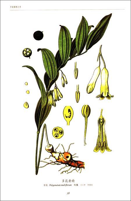回至 世界大师手绘彩色植物之书 (平装)