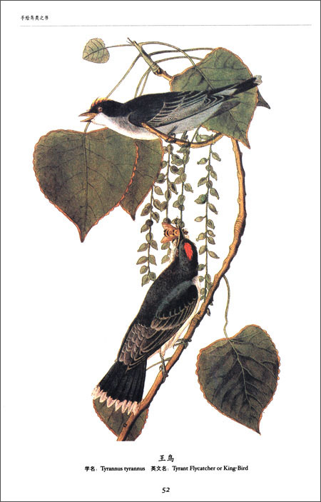世界大师手绘经典:鸟类之书