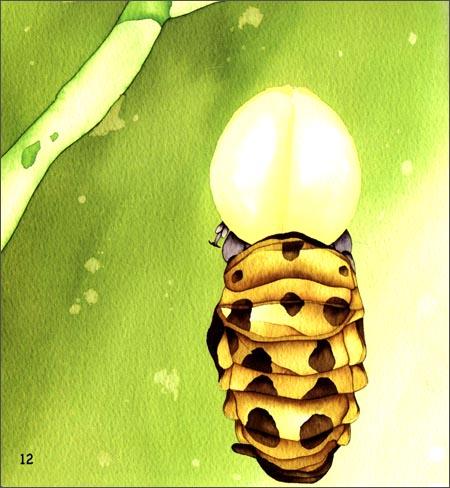 瓢虫幼虫的成长速度非常快