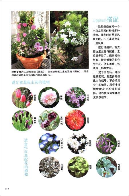 阳台花草混栽园艺