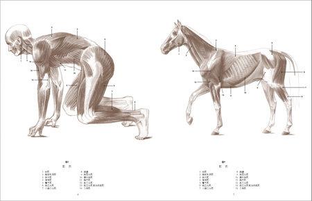 回至 解剖绘画学校:动物 (平装)