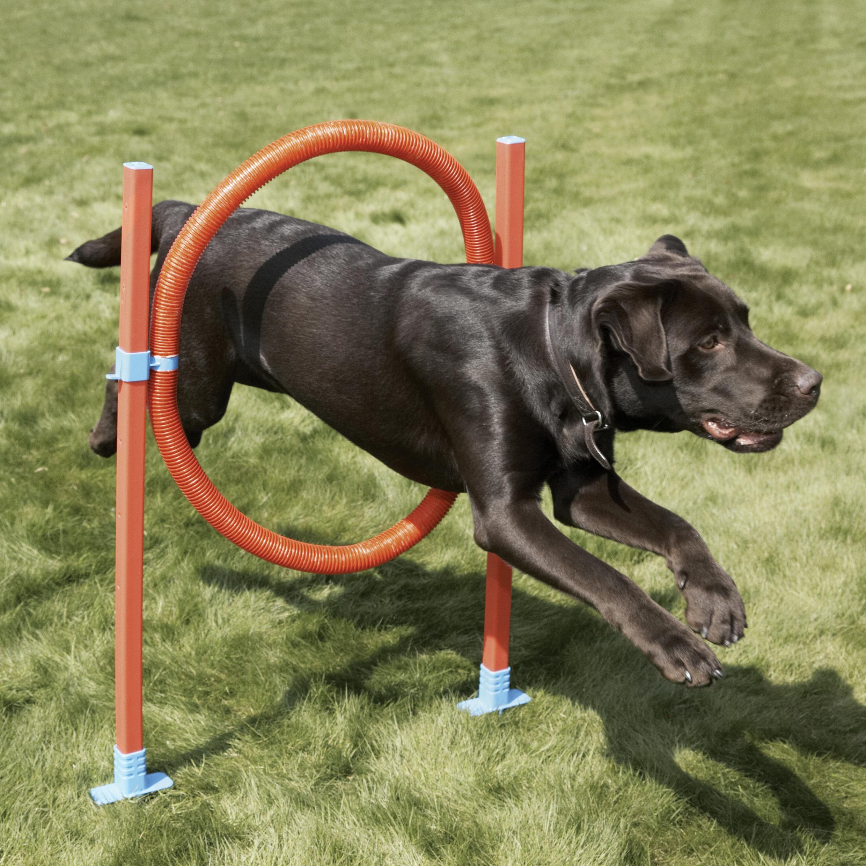 rosewood宠物狗敏捷训练跳栏69311