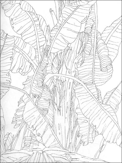 芭蕉叶手绘背景图