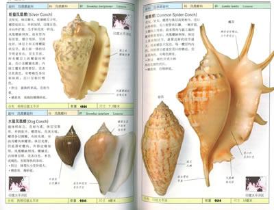 经典图鉴珍藏:《贝壳》
