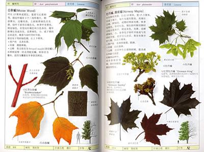 经典图鉴珍藏:《树》