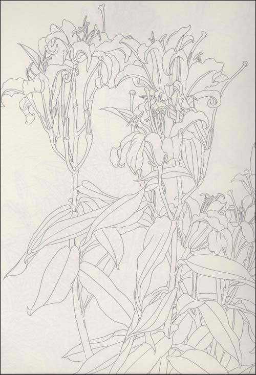 素描百合花的步骤图片 百合花素描画法_百合花素描