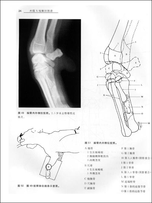 犬猫X线解剖图谱