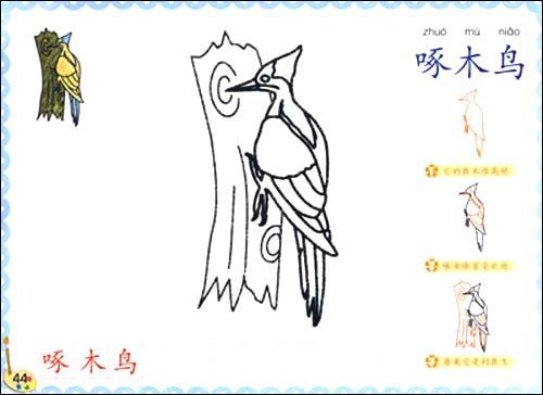 《奇妙简笔画:动物篇(附盘)》