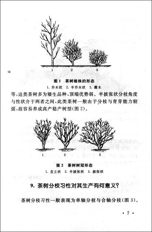 茶树栽培基础知识与技术问答/王国 钅监>-图书-亚马逊