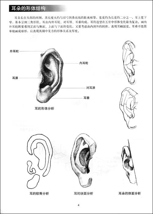 素描中,耳朵的画法,求具体步骤.