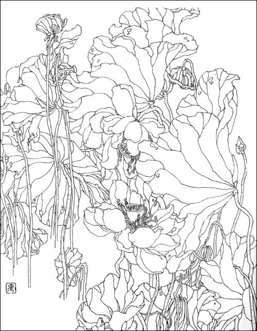 梅花图片/梅花图片大全大图/工笔白描梅花图片/白描鸟的结构图片大全
