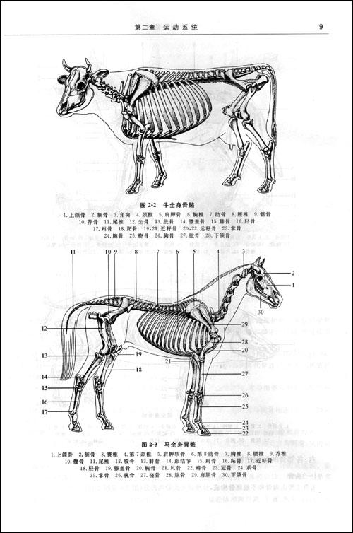 面羊的捏法步骤图片
