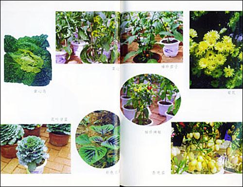 盆花彩色简笔画