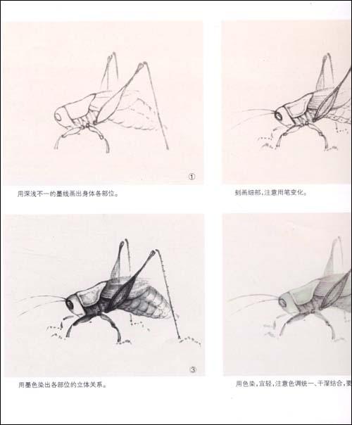 工笔画蜻蜓的画法步骤