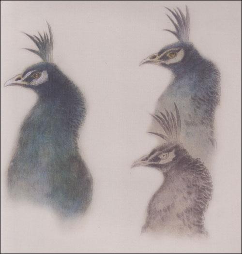 中国画技法 工笔孔雀图片
