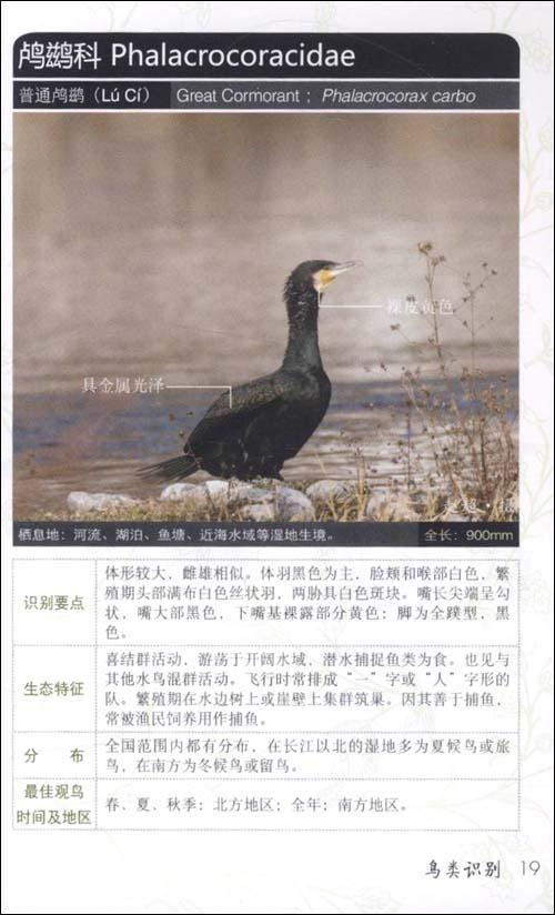 野外观鸟手册