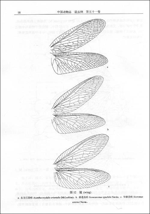 中国动物志 昆虫纲 第五十一卷