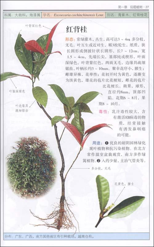 有害植物:近200种有害植物的彩色图鉴