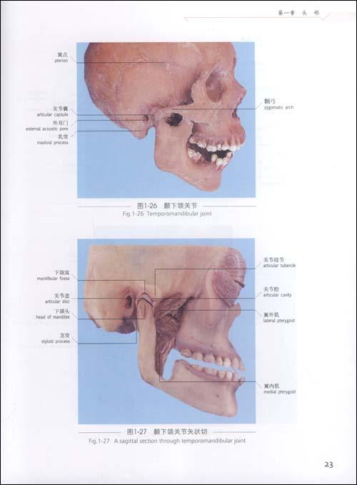 头颈部应用解剖学实物图谱 为临床解剖学实物图谱丛书之一 -头颈部应